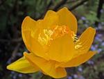 Медитация на чакрах – настройка цветом