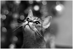 Стоит ли искать черную кошку в темной комнате, особенно … если она там есть или приметы сбываются – хорошая интуиция